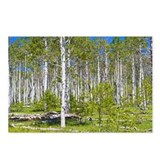 Aspen grove near Zion National park, The Kolob Res