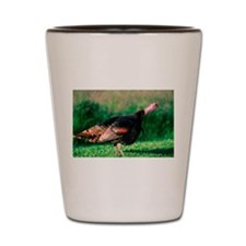 Wild Turkey Stare Shot Glass