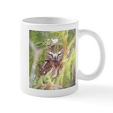 Northern Saw-whet Owl hiding Mug