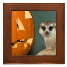 Meerkat Next to Pumpkin Framed Tile