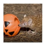 Lesser Tenrec with Pumpkin Tile Coaster