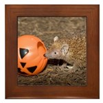 Lesser Tenrec with Pumpkin Framed Tile