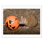 Lesser Tenrec with Pumpkin Small Poster