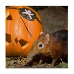 Elephant Shrew With Pumpkin Tile Coaster