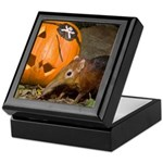Elephant Shrew With Pumpkin Keepsake Box