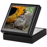 Otter With Pumpkin Keepsake Box