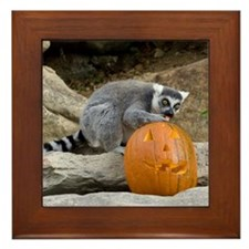 Lemur With Pumpkin Framed Tile