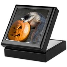 Lemur Looking into Pumpkin Keepsake Box