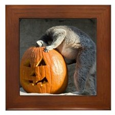 Lemur Looking into Pumpkin Framed Tile