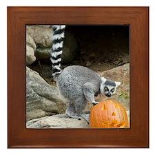 Lemur Pumpkin Framed Tile