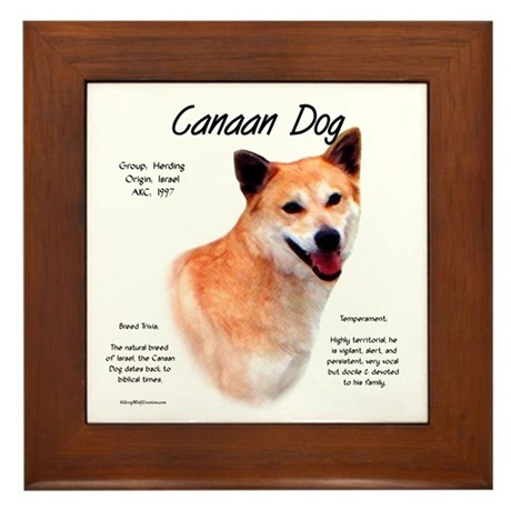 Canaan Dog Framed Tile
