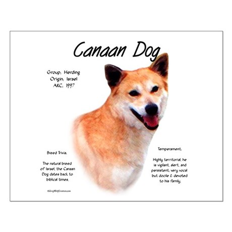 Canaan Dog Small Poster