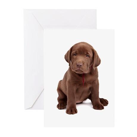 Chocolate Labrador Puppy. Greeting Cards (Pk of 10