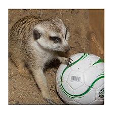 Meerkat on Soccer Ball Tile Coaster