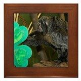Monkey Grabbing Shamrock Framed Tile