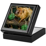 Golden Lion Tamarin with Shamrock Keepsake Box