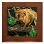 Golden Lion Tamarin with Shamrock Framed Tile