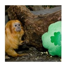 Golden Lion Tamarin Next To Shamrock Tile Coaster