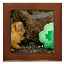 Golden Lion Tamarin Next To Shamrock Framed Tile