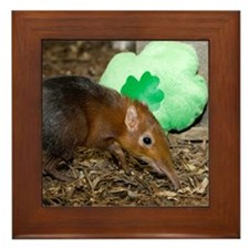 Elephant Shrew with Shamrock Framed Tile