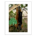 Red Ruffed Lemur with Shamrock Small Poster