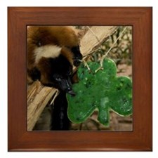 Red Ruffed Lemur Eating Shamrock Framed Tile