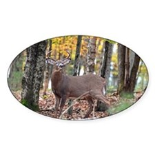 8 Pointer Decal