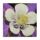 Blue Columbine 5 Tile Coaster