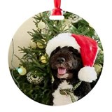 Bo the Dog Ornament