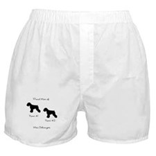 2 Schauzers - Cropped Tails/Natural Ears Boxer Sho