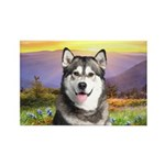 Malamute Meadow Rectangle Magnet