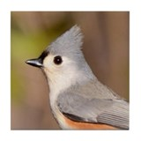Tufted Titmouse Tile Coaster