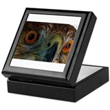 Raptor Eyes Keepsake Box