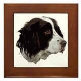 Springer spaniel Framed Tile
