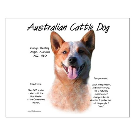ACD (red speckle) Small Poster