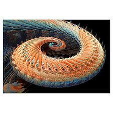 Dragon tail fractal