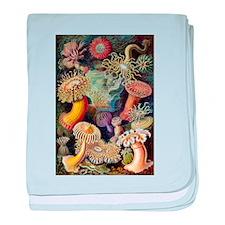 Antique 1904 Sea Anemone Nature Print baby blanket