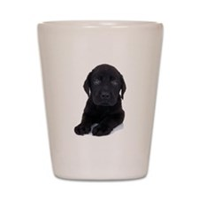 Curious Black Labrador Shot Glass