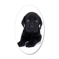 Curious Black Labrador 20x12 Oval Wall Decal