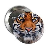 "Male Siberian Tiger 2.25"" Button"