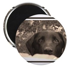 Unique Labrador Magnet