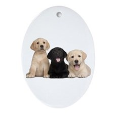 Labrador puppies Ornament (Oval)