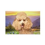 Poodle Meadow Rectangle Magnet (100 pack)