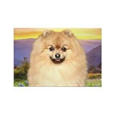 Pomeranian Meadow Rectangle Magnet (100 pack)