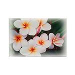 plumeria.jpg Rectangle Magnet (100 pack)