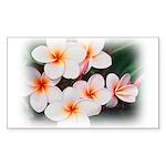 plumeria.jpg Sticker (Rectangle 10 pk)