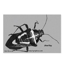 Shield Bug Postcards (Package of 8)