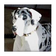 Great Dane Harlequin Dog Coaster