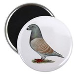 American Show Racer Opal Pigeon Magnet