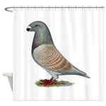 American Show Racer Opal Pigeon Shower Curtain